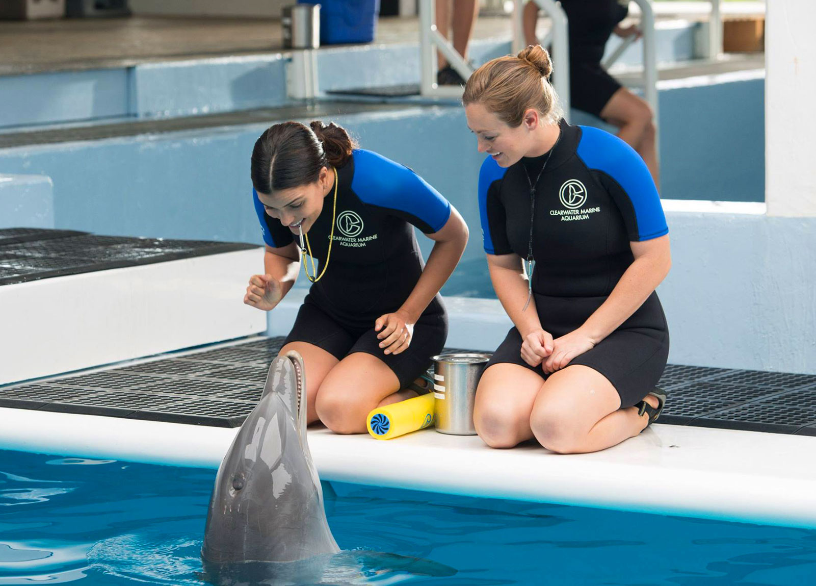 Clearwater Marine Aquarium - Clearwater Florida Attractions on