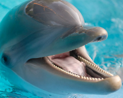 Clearwater Marine Aquarium: Rescue, Rehabilitation, and Respect