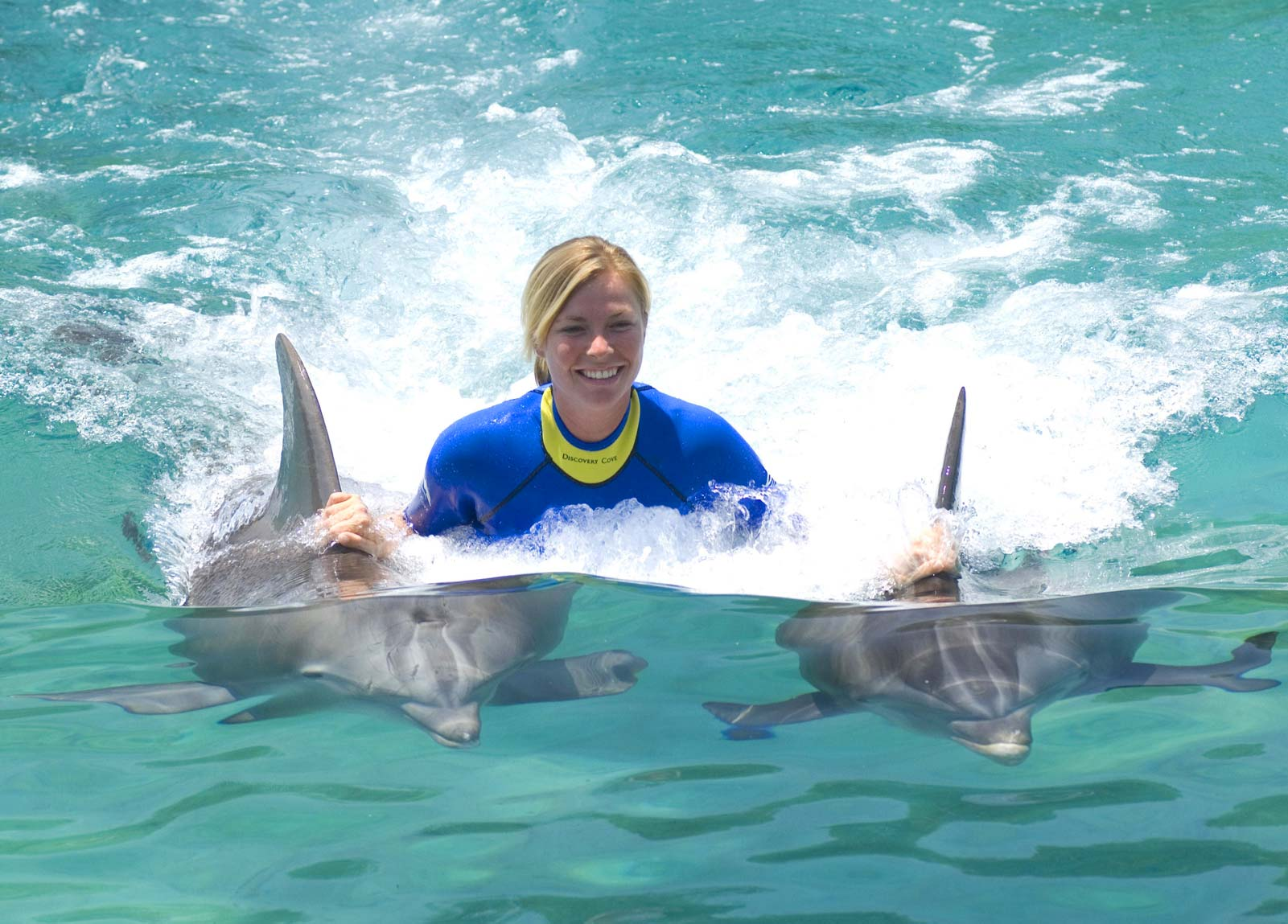 Swim with Dolphins Florida