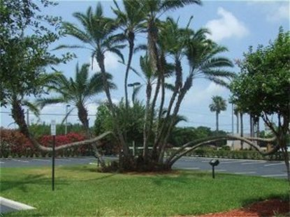 Holiday Inn Express Hotel & Suites Tampa Anderson Rd