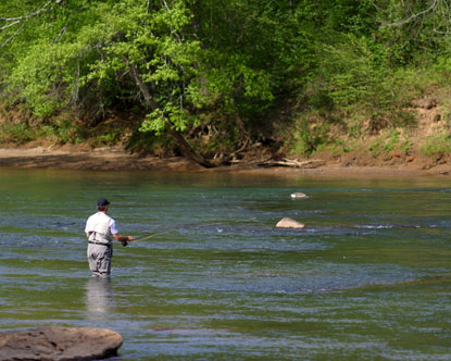 Georgia fly fishing sunfish for Fly fishing north georgia
