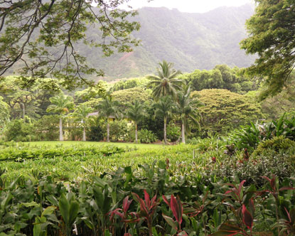 Hawaii Plantations