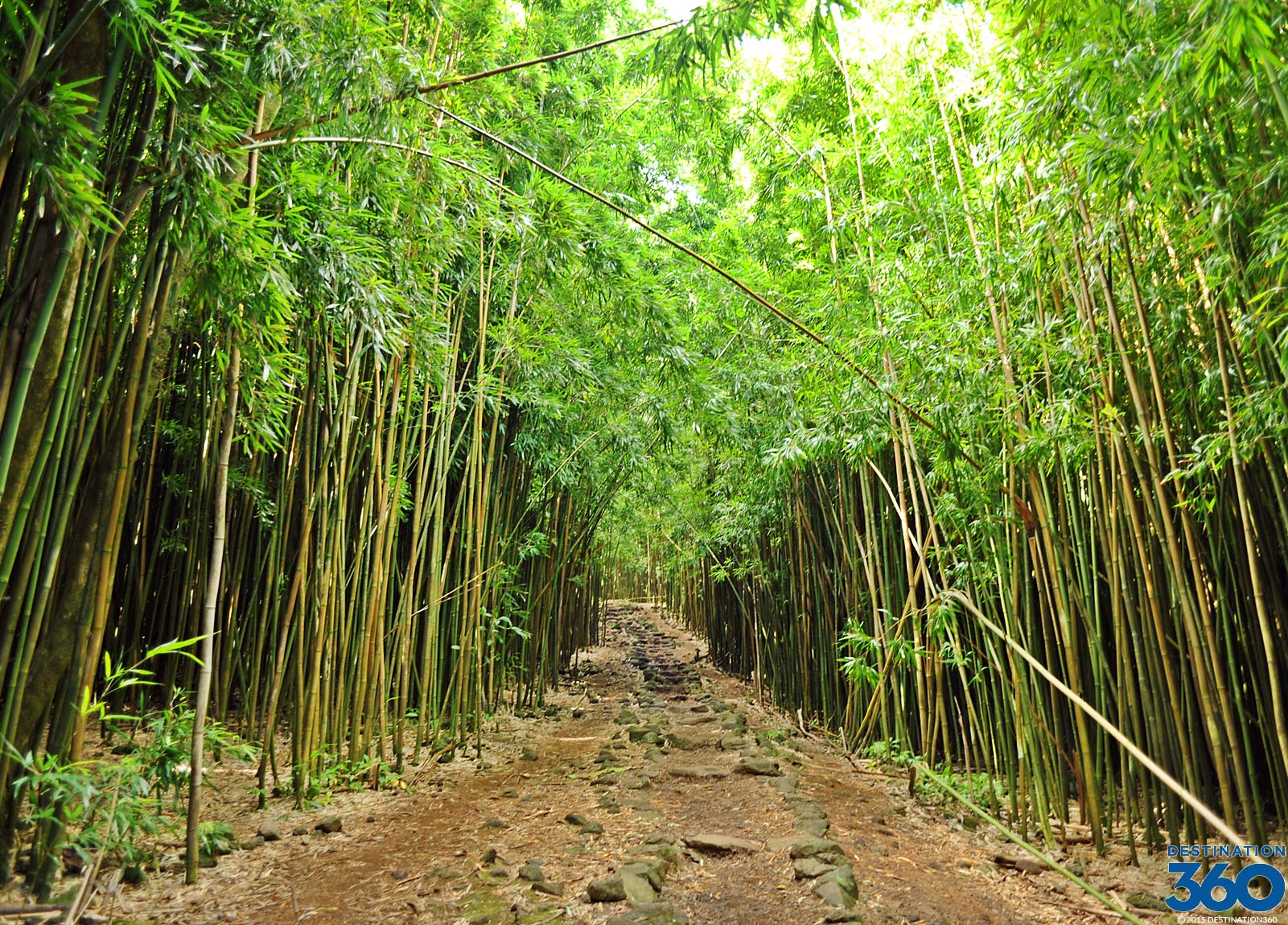 Maui Bamboo Forest Virtual Tour
