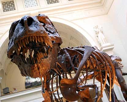 Tyrannosaurus Rex Fossil SkeletonTyrannosaurus Skeleton In Museum