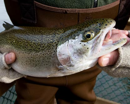 Indiana fishing fly fishing in indiana for Trout fishing indiana