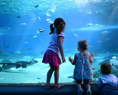 Newport Aquarium Aquarium In Newport Kentucky