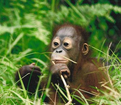 Jackson Zoo - Zoo in Jackson MS