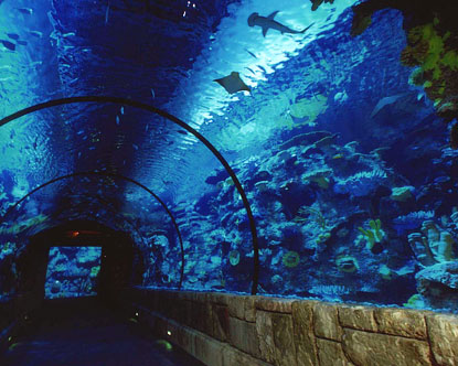 http://www.destination360.com/north-america/us/nevada/las-vegas/images/s/mandalay-bay-shark-reef-tunnel.jpg