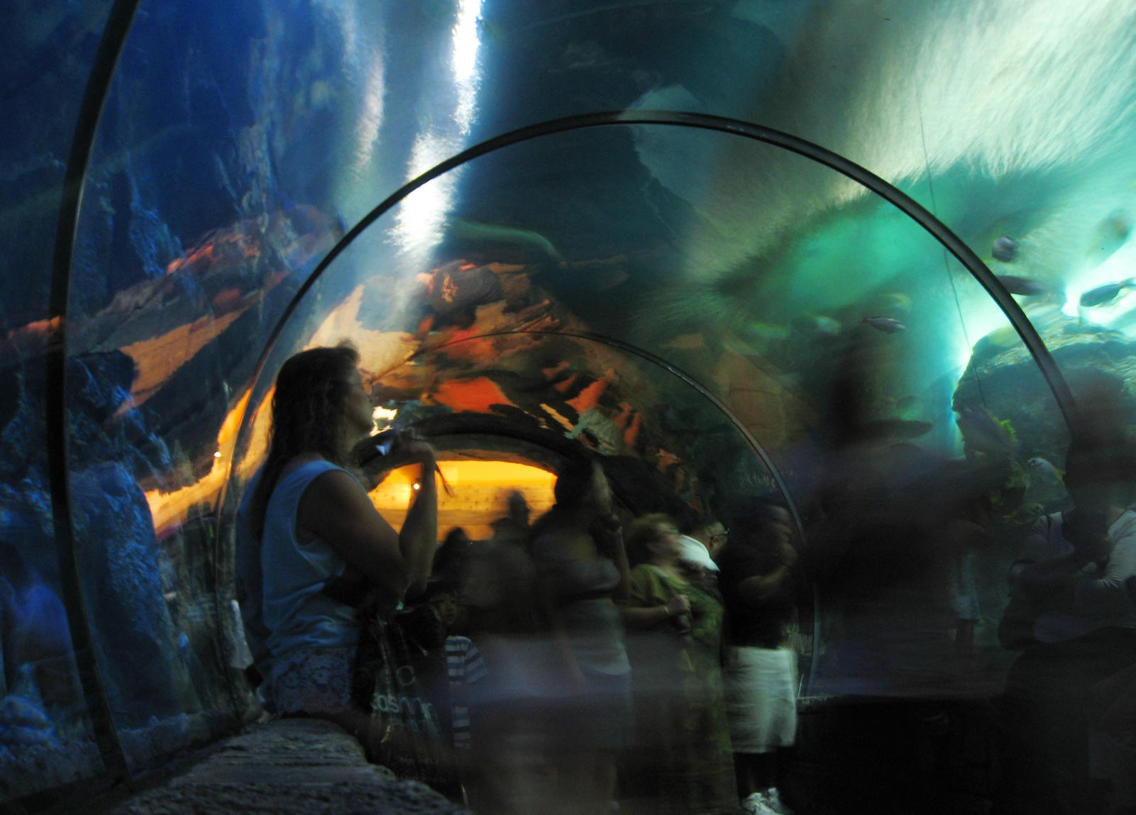 Shark Reef Virtual Tour