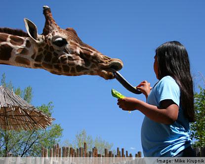 Rio Grande Zoo Albuquerque Zoo