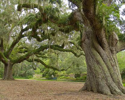 Exceptionnel Brookgreen Gardens