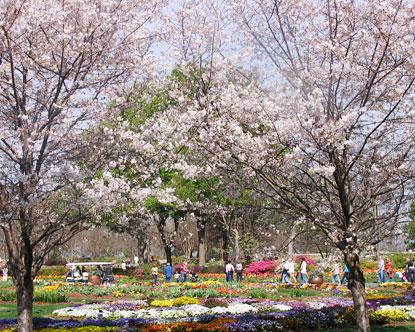 Dallas Arboretum Dallas Botanical Gardens