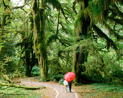 Hoh Rain Forest Hall Of Mosses