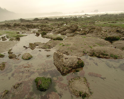Olympic Peninsula - Shi Shi Beach Virtual Tour
