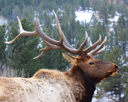 Rocky Mountain Animals