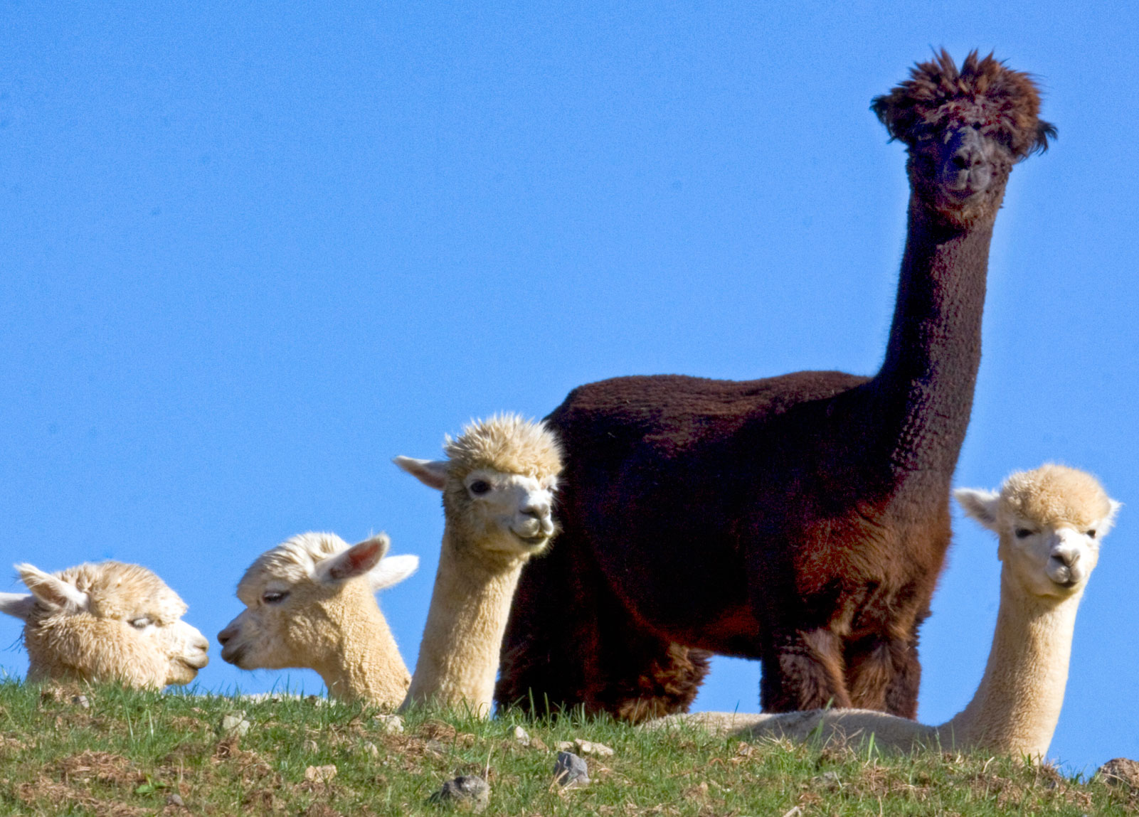 Andes Mountain Animals
