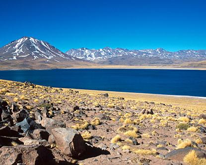Patagonia South America >> Atacama Desert - Atacama Desert Animals