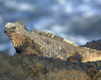 Galapagos Reptiles Virtual Tour