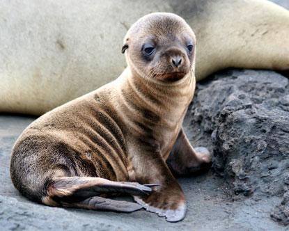 Galapagos Islands Family Travel Galapagos Family Vacation