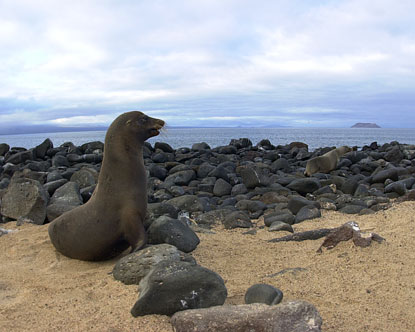 Galapagos North Seymour Island