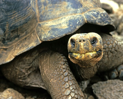 Galapagos Tortoises Virtual Tour